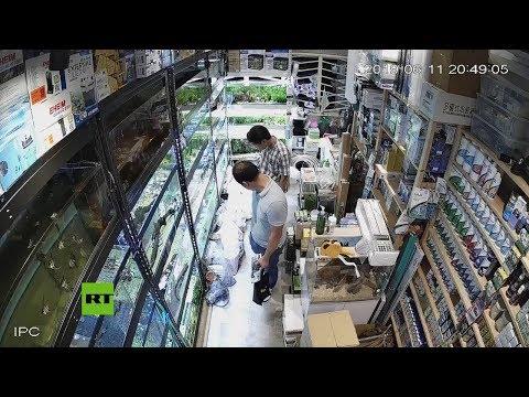 Las cámaras captan cómo un hombre envenena a decenas de peces en una tienda de mascotas