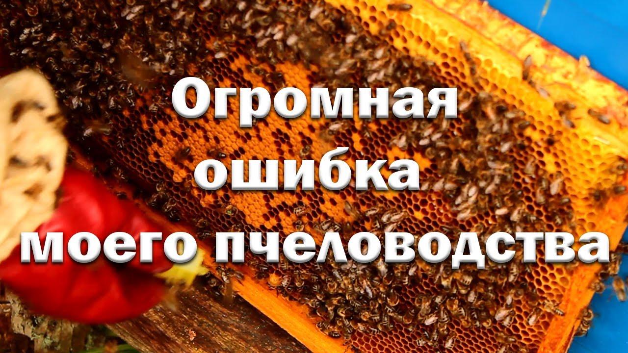 Фатальная ошибка начинающего пчеловода!
