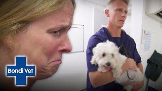 Brave Dog has a Complicated Pregnancy with a Crazy Outcome! | Classic Clip | Bondi Vet
