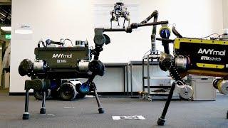 Robots' Fist Bump (ANYmal & Co.)