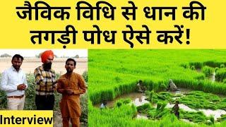धान की खेती वाले जरूर देखें जैविक विधि |Organic paddy nursery preparation & management|Dhaan kheti