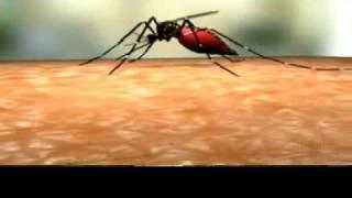 Cooking | Ciclo de vida Aedes Aegypti