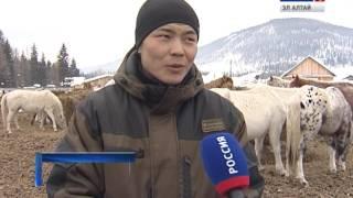 Почти 1 тыс. личных подсобных хозяйств Улаганского района оказана материальная помощь