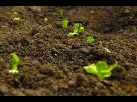 """""""Soil Health Card""""."""