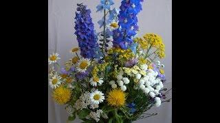 Видео-урок Летние цветы