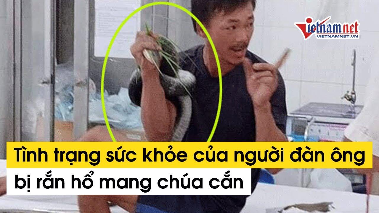 Tình trạng sức khỏe của người đàn ông bị rắn hổ mang chúa cắn ở Tây Ninh   Tin tức Vietnamnet