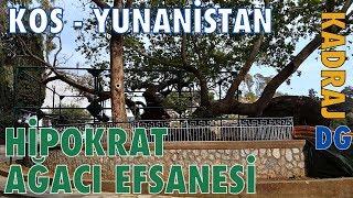 Kos Adası Hipokrat Ağacı, Bir Turizm Efsanesi, Yunanistan DG Dünya Gezegeni