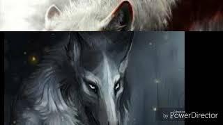 Anime wolves: Rosa dear