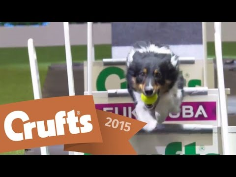 Flyball Team Semi Finals | Crufts 2015