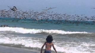 これは現実の風景なのか?大量のペリカンたちが次々と海にダイブして魚を取るの図