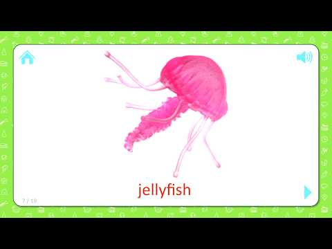 jellyfish---sea-creatures-[ocean-life]---flashcards-for-kids