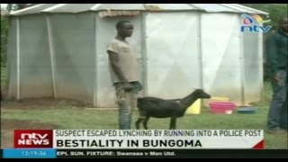 Man Arrested In Bungoma For Engaging In Bestiality