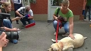 Юлии Дьяковой вернули собаку-поводыря
