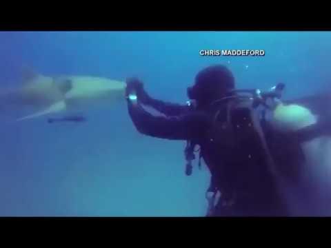 El tiburón lesionado que pide ayuda