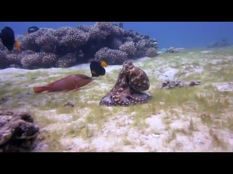 Canon S100 Underwater