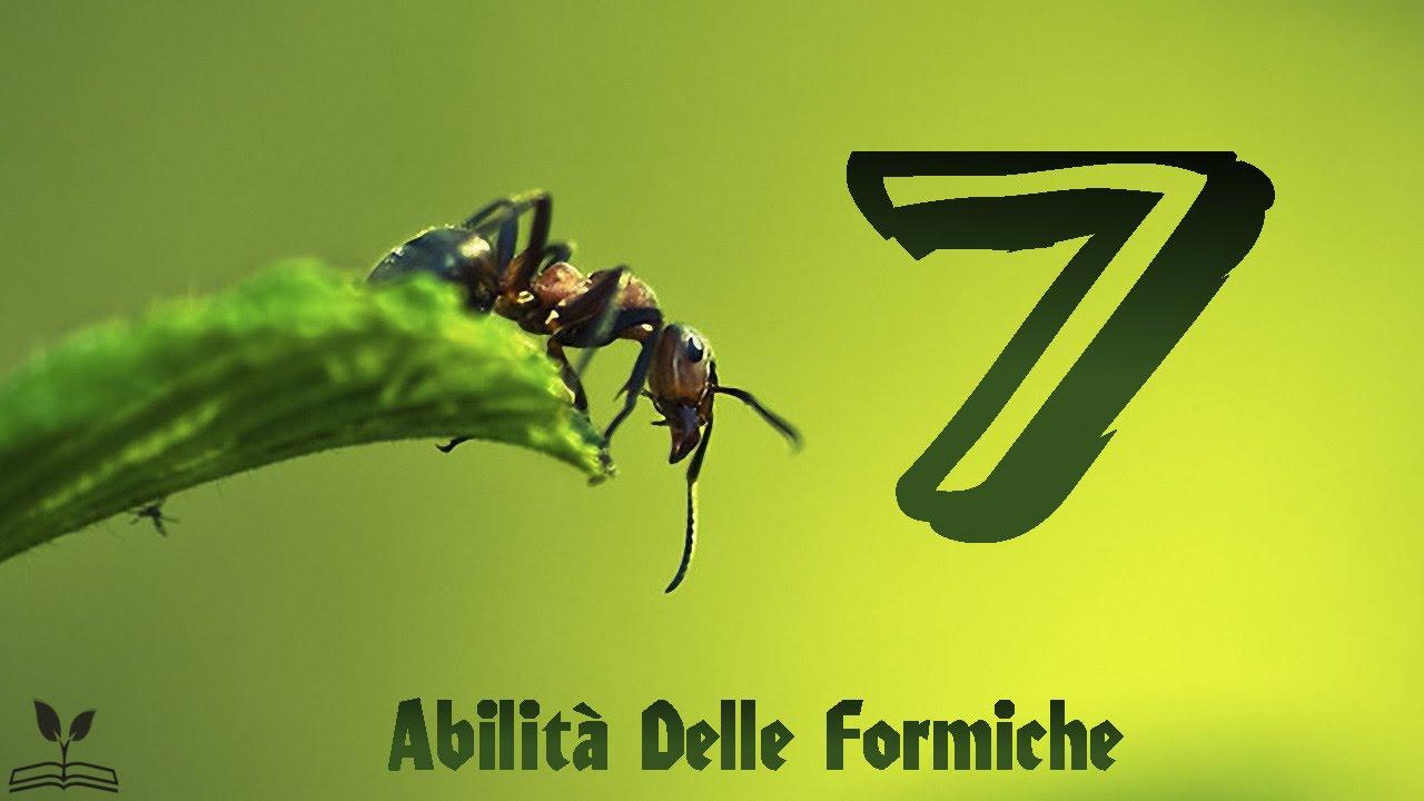 7 incredibili abilit delle formiche youtube for Debellare formiche