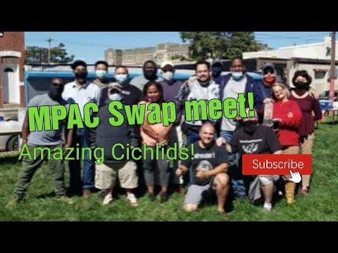 Amazing South American Cichlids! [Philly Aquarium Club Swap]