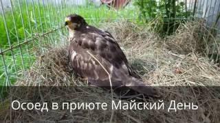 Приют Майский День. Иваново. Выпускаем Осоеда