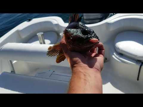 Morro Bay Fishing Halibut, Lingcod, Rockfish June  30 2018