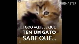 Feliz dia Internacional do Gatos