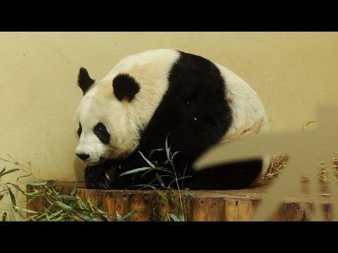 Places to see in ( Edinburgh - UK ) Edinburgh Zoo
