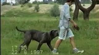 фильм собаки конвертированный