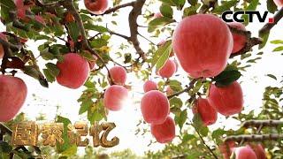 大国粮仓——你知道中国有多少种水果产量全球第一吗?20210513 |《国家记忆》CCTV中文国际 - YouTube
