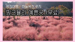 평창 여행/핑크뮬리 장소/대관령 하늘목장/휘닉스 루지/…