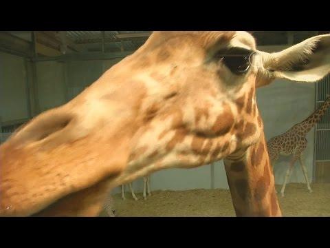 Новая концепция: парижский зоопарк открывает закулисье (новости)