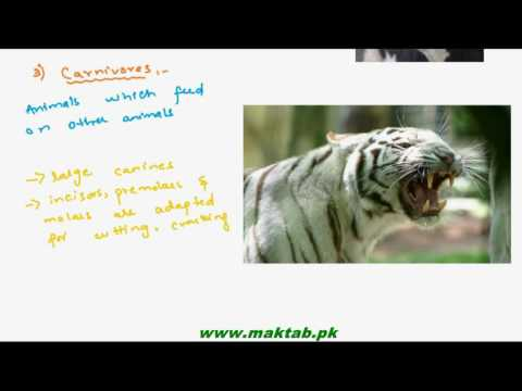 FSc Biology Book1, CH 12, LEC 4: Methods of Animal Nutrition
