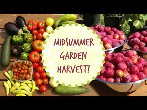 Growing Our Own Food | Midsummer Vegetable Garden & Orchard Tour | 2017