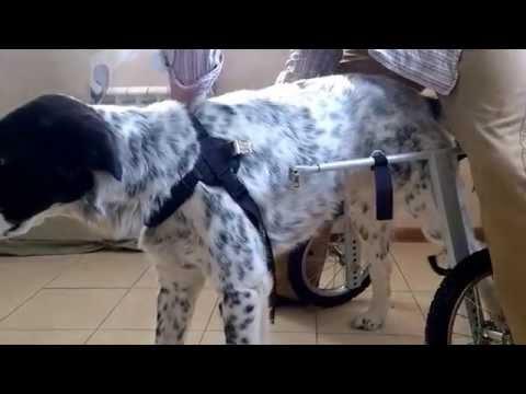 Инвалидная коляска для собак Animal Mobile