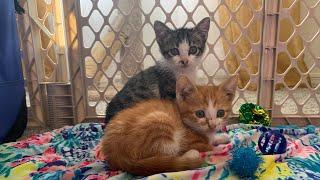 Stray Kittens Get Named 🥰