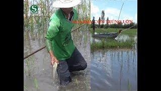 Đẩy côn bắt toàn cá lóc, cá trê | Fishing | Sắc Màu VN