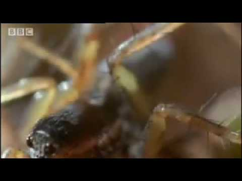 Amazing miniature world  Sir David Attenborough's Life in the Undergrowth  BBC wildlife