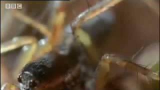 Amazing miniature world - Sir David Attenborough's Life in the Undergrowth - BBC wildlife