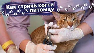 Как стричь когти кошке или собаке. Ветеринар демонстрирует.