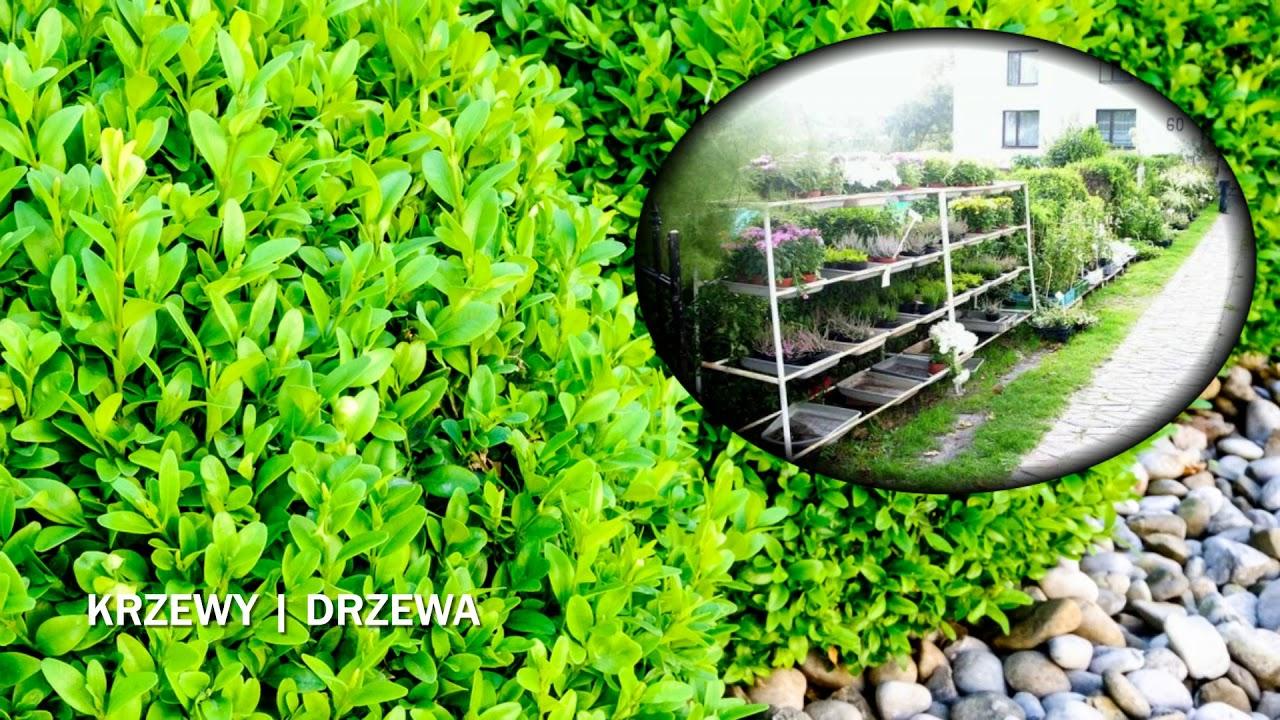 Centrum Ogrodnicze Sklep Ogrodniczy Artykuły Ogrodnicze Grudziądz Bartex