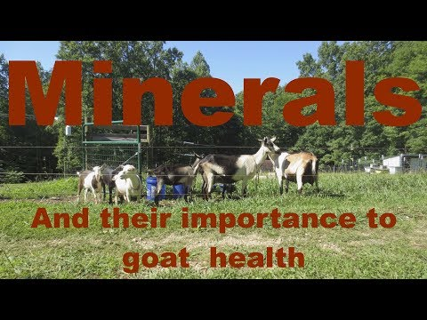 Minerals and their importance to goat health