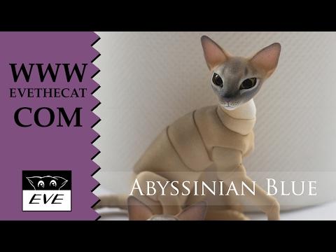 Demonstration: Abyssinian Blue Cat