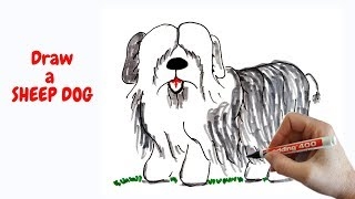 How to draw a cute dog   how to draw a sheepdog