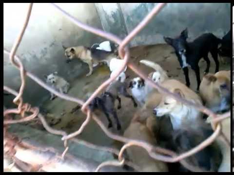 Download Horrible realidad en el Antirrábico de Apodaca, N.L. México. Perreras = muerte de inocentes.