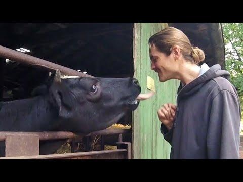 COW'S LOVE ORGANIC POTATOES