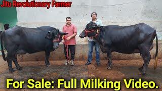 👍FOR SALE: Top Murrah|| Milk 20+ litre Per Day @Hardeep Sir