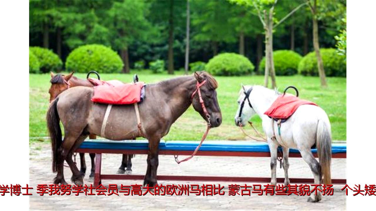 矮小_蒙古马的体型非常矮小,为什么驾驭这种马匹的蒙古骑兵却能 ...