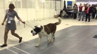 ''Бетховен''. Выставка собак (САС, ЧФ) 14.02.2016. Санкт-Петербург.