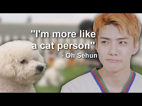 Sehun Is A Cat Person