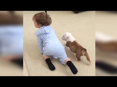 Bulldog Puppy Playing With Baby - Funny Dogs and Babies Compilation 2018