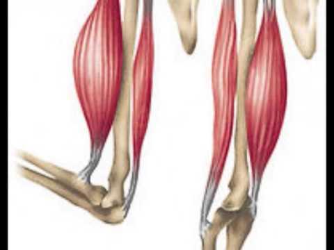 Músculo esquelético estriado - YouTube