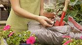 Космея выращивание из семян когда сажать - YouTube